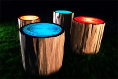 Judson Beaumon tree rings