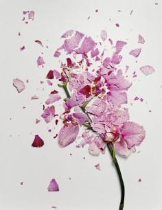 JON SHIREMAN BROKEN FLOWER
