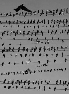 HAL KAYE THE BIRDS