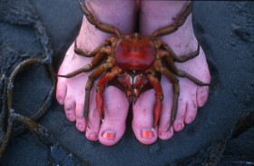 Paul Margolis  crab and mandy