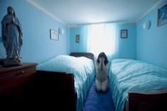 Aneta NOWICKA Death by Domestication