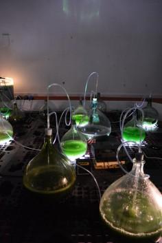 Gaspard et Sandra Bebie-Valerian   Viridarium : Bioreacteur de spiruline