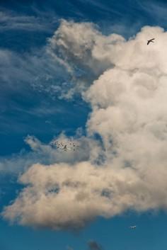 Alva Bernadine  clouds