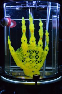AMY KARLE regenerative reliquary