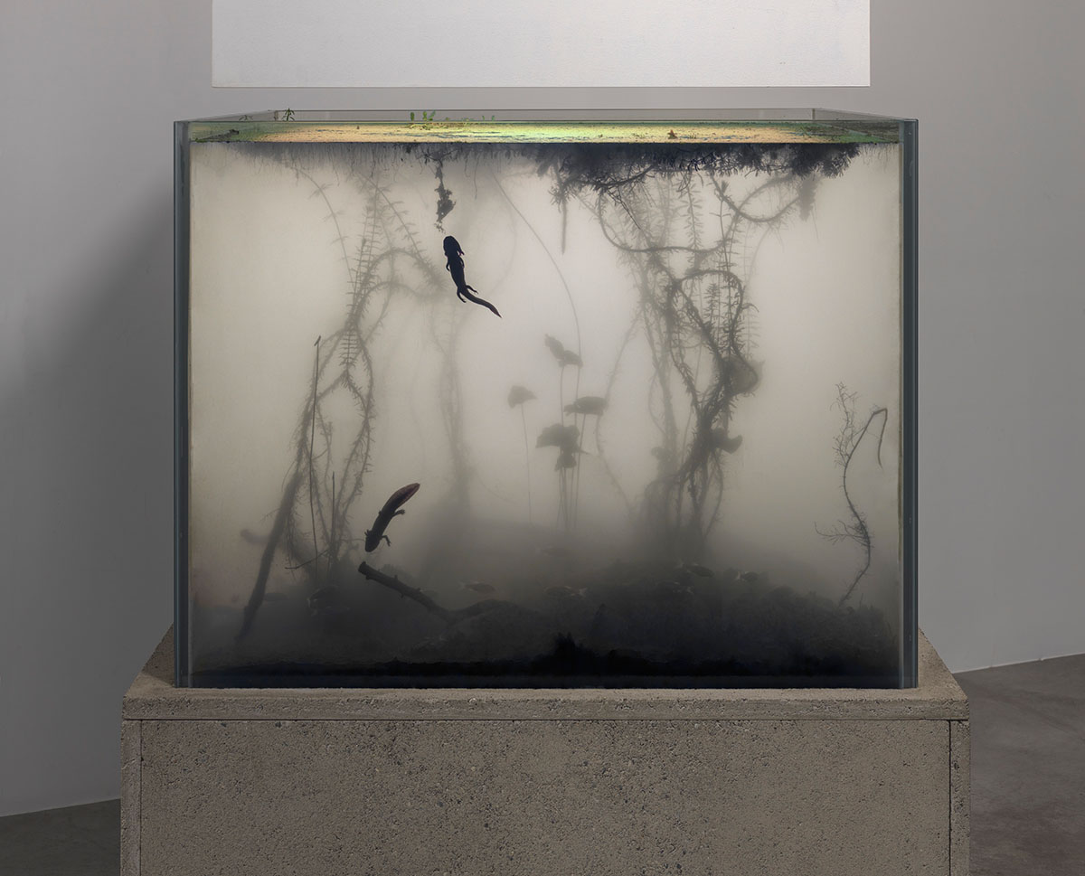PIERRE HUYGHE 668